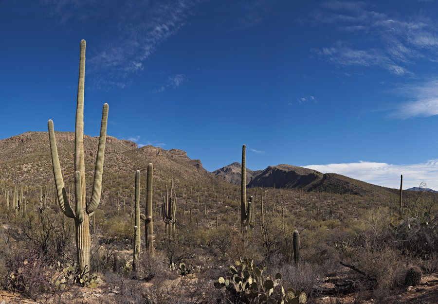 Sabino Canyon, January 2010